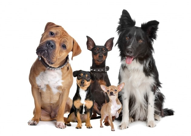 Schedule Appointment with Michelle Payson Dog Training