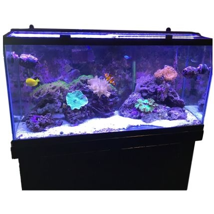 Schedule Appointment with Benjamin's Aquarium Services