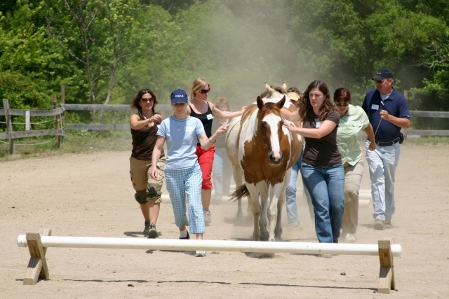 Restorative Reins Equine Therapy and Wellness Centre - Horseback