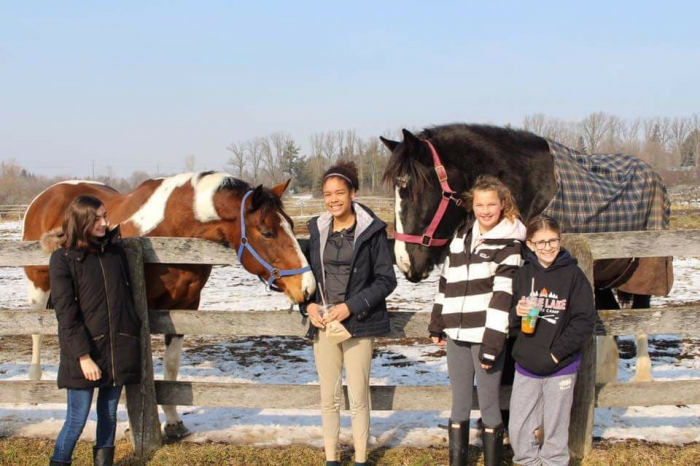 Restorative Reins Equine Therapy and Wellness Centre
