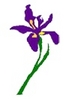 Purple Iris Healing Center