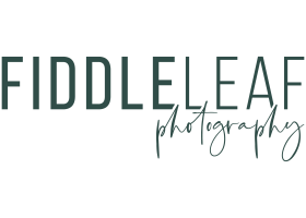 Fiddle Leaf Photography