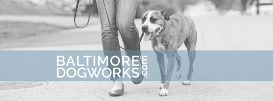 Baltimore Dogworks, LLC