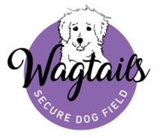 Wagtails Secure Dog Field