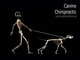 Animal Chiro  Appointments