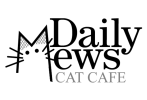 Daily Mews Cat Cafe