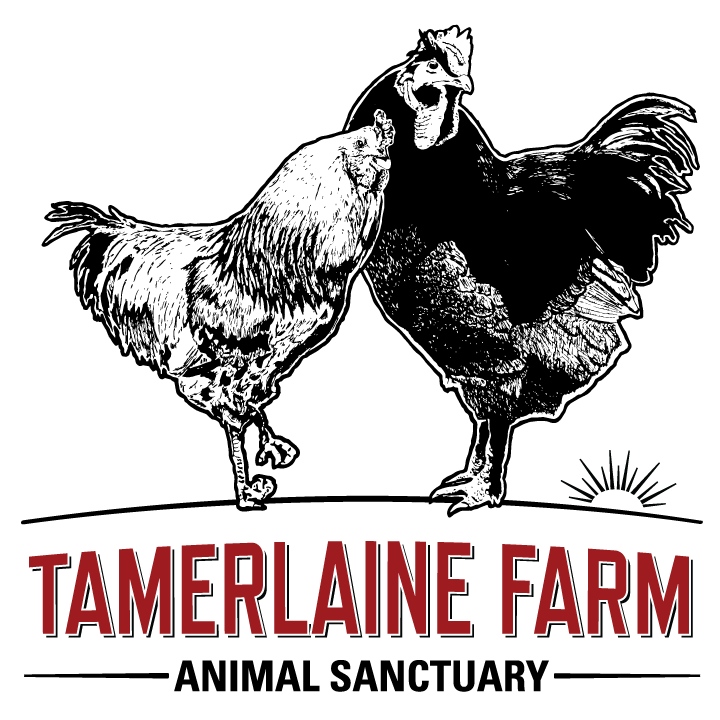 Tamerlaine Farm Animal Sanctuary