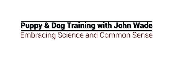 Companion Puppy & Dog Training With John Wade