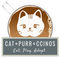 Catpurrccinos Cat Cafe
