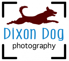 Dixon Dog Photography Bookings