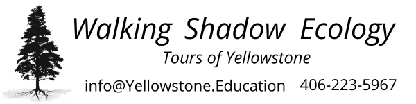 Walking Shadow Ecology Tours of Yellowstone