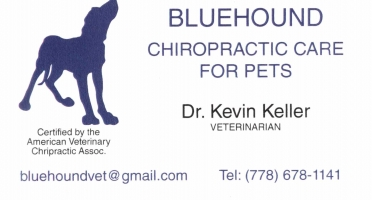 Bluehound Chiropractic Care for Pets